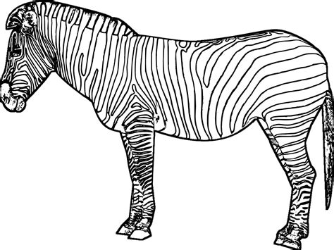 printable coloring page of a zebra zebra 19 animals printable coloring pages