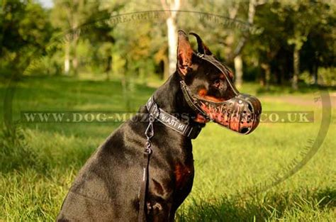 best house guard dog best breeds for guard dogs future house now dog breeds picture