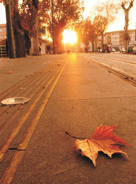 imagenes increibles de otoño blog de donbarato com oto 241 o