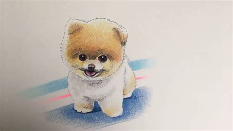 how to draw a pomeranian drawing a pomeranian from scratch with color pencils