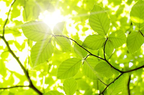 scientists discover methods of harvesting electricity from plants inhabitat green design