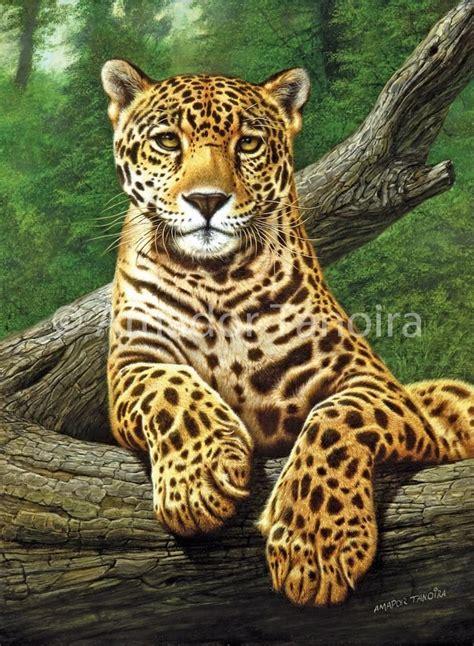 imagenes jaguarete reproduccion original y certificada joven jaguarete