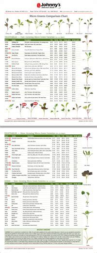 microgreens comparison chart growing microgreens