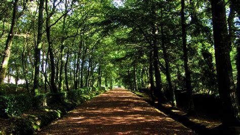 imagenes extrañas en el bosque viajes los ocho bosques m 225 s espectaculares del mundo