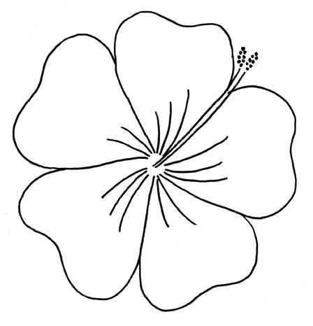 free printable tropical flowers 22 best images about drawing ideas on pinterest disney