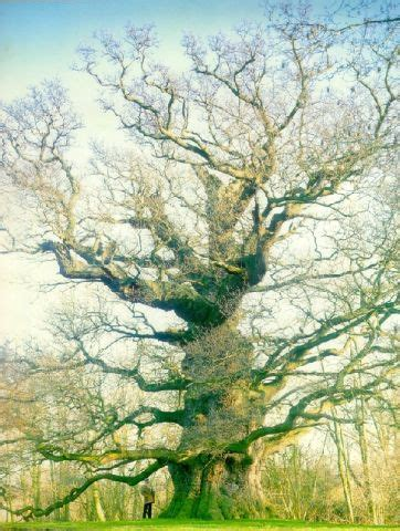 european trees european trees