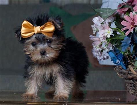 free puppies in shreveport pets shreveport la free classified ads