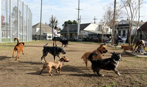 puppies new orleans wisner run opens signalling new day for parks in new orleans uptown messenger