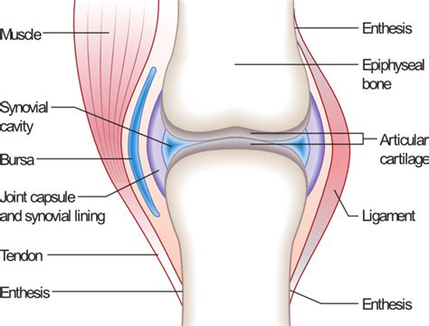 diagram of knee joint joint disease in dogs vetrxdirect blogvetrxdirect
