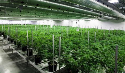 Greenhouse Blueprints the new canadian cannabis oligarchy the fix