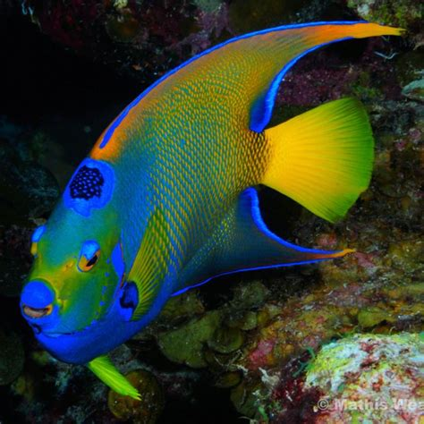 colorful saltwater fish 25 best ideas about colorful fish on pretty