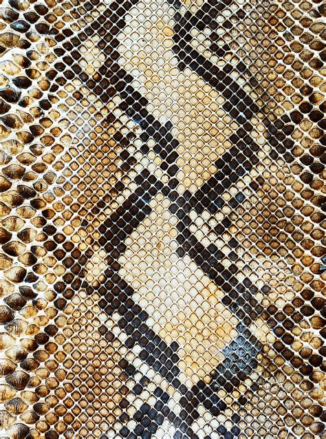 snake skin print on behance snake skin by yan sayan via 500px patterns in nature