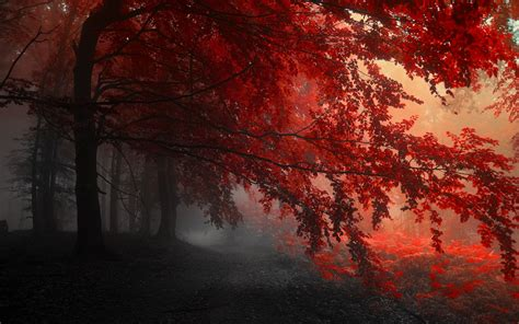 red wallpapers widescreen long wallpapers