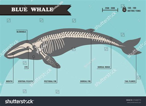 How To Make Easy Halloween Decorations At Home by Orca Skeleton Diagram