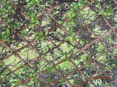 giardini toscana progettazione e realizzazione recinzioni in toscana
