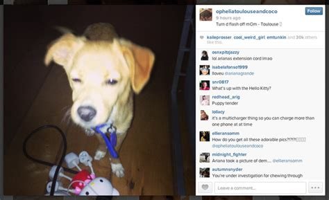 puppy captions for instagram you can now follow grande s dogs on instagram zimbio