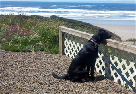 lincoln county animal shelter oregon pet friendly hotels in newport oregon kid