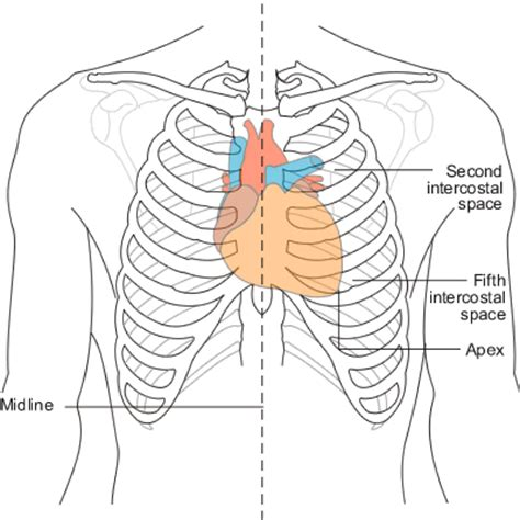 chest diagram human sternum diagram human get free image about wiring