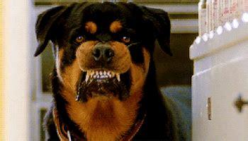 rabid puppies rabid gifs find on giphy