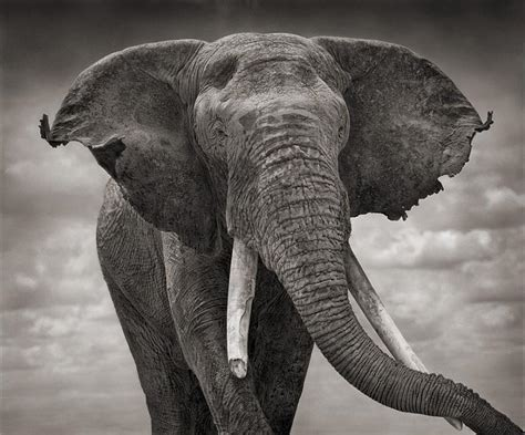 top 10 facts about elephants 20 pics picliste