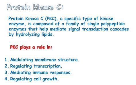 c protein kinase anti cancer as protein kinase c tyrosine inhibitor