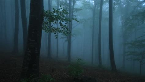 film horor forest ghost in the forest horror movie scene stock footage