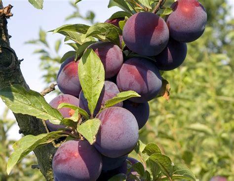 why are many fruit plants trees a fruit of the spirit abundant fresh fruit to serve god