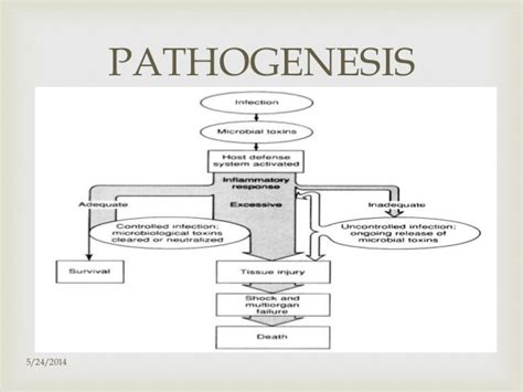 septic shock pathophysiology flowchart septic shock