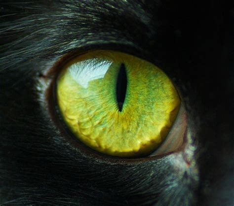 Cat Eye cat eye a fergy galleries digital photography review