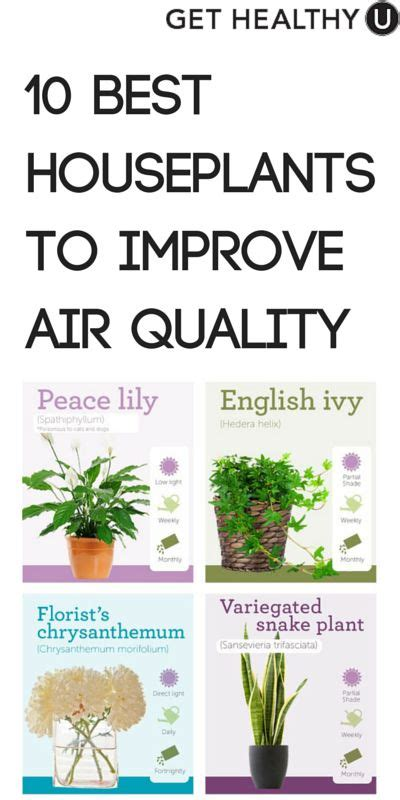 best houseplants for air quality 10 best houseplants to improve air quality infographic