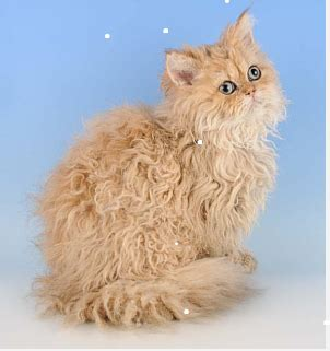 Matted In Kittens by Cats And Matted Fur 187 Albuquerque Vetco