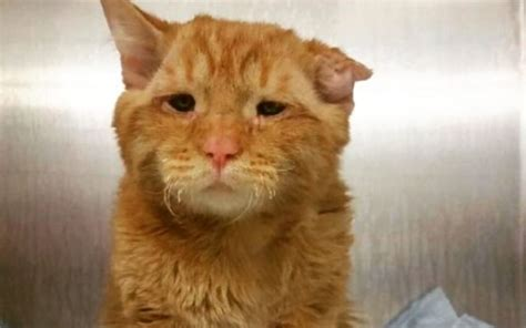 saddest in the world saddest cat in the world smiling again after row rescue