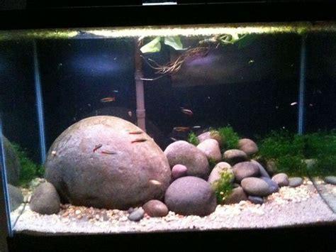 aquarium design rocks great rock work aquatic project hillstream pinterest