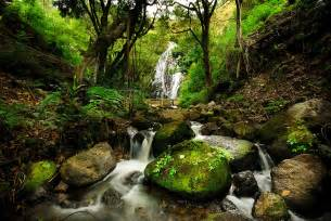 Woods Wall Mural peaceful forest waterfall canvas print amp canvas art