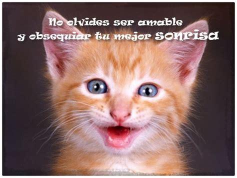 imagenes gatitos hermosos imagenes de perritos y gatitos bonitos archivos gatitos