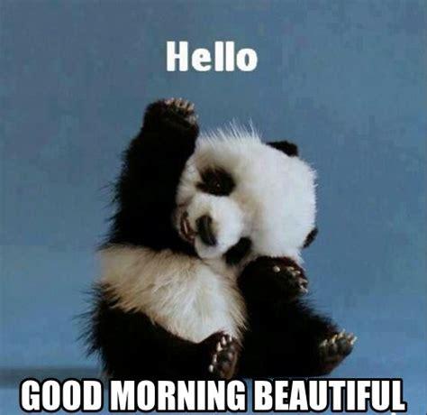 cute funny good morning beautiful memes   loved