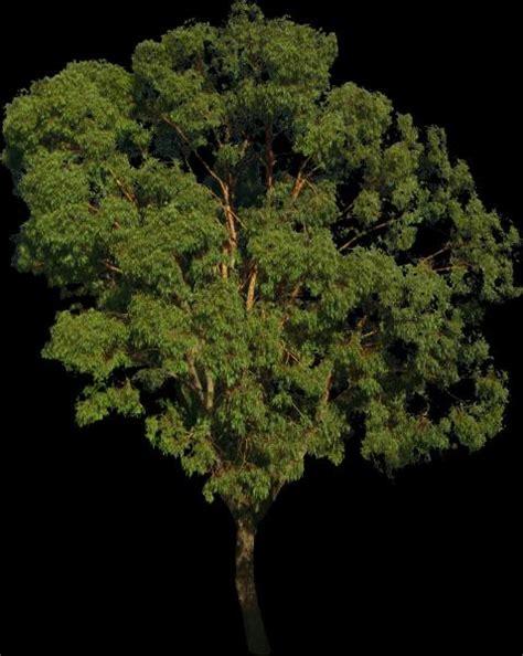 div opacity tree texture with opacity bump texture sharecg