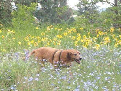 murmur in puppies grade 2 murmur holistic vs conventional treatment