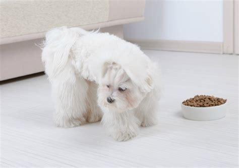 dog not eating my dog won t eat dog food thriftyfun