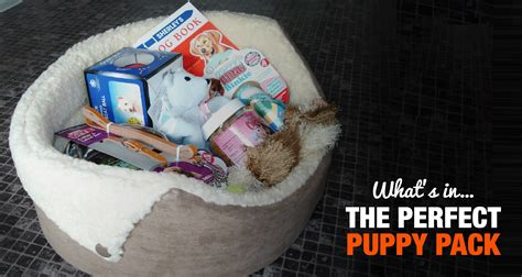 puppy pack what should a puppy pack contain paperwork toys etc
