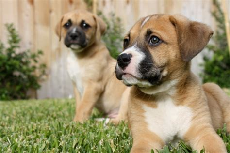what is a backyard breeder what is a backyard breeder and how can i help