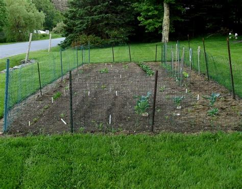 Cheap Garden Fencing Ideas Homeofficedecoration Cheap Vegetable Garden Fence Ideas