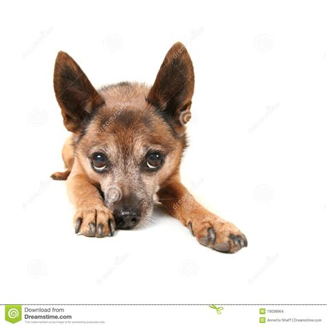 pouting puppy pouting stock images image 19038964