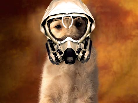 puppy gas second smoke effects and pets the wellbeing of all creatures
