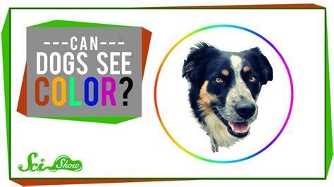 can dogs see color can see color 28 images the color of empathy is not flat insights to color color