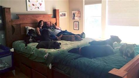 is a california king bigger than a king bed king size wasn t big enough for eight dogs so mom and dad