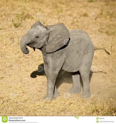 Elephant Calf Stock Photos - Image: 6004523