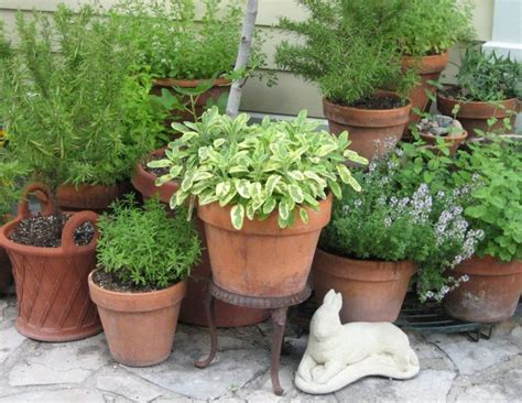 Herb Garden Planter Container by 1000 Ideas About Potted Herb Gardens On