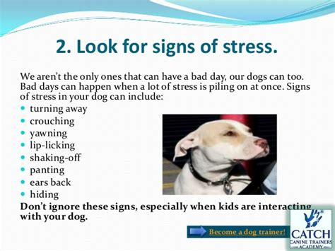 signs of stress in dogs is your with you need to be sure