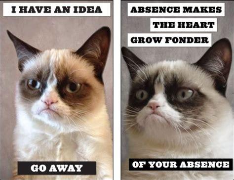 Go Away by Grumpy Cat Sunday Pictures Go Away Grumpy Cat Is Not